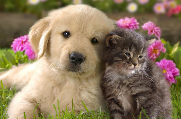 dog_and_cat_-_Google_検索
