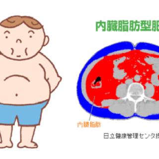 内臓脂肪型肥満に男女差は存在するのか?