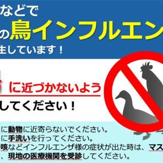 鳥インフルエンザ対策するにはまず知ることが大切