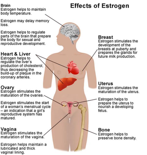 エストロゲンの臓器別作用と効果