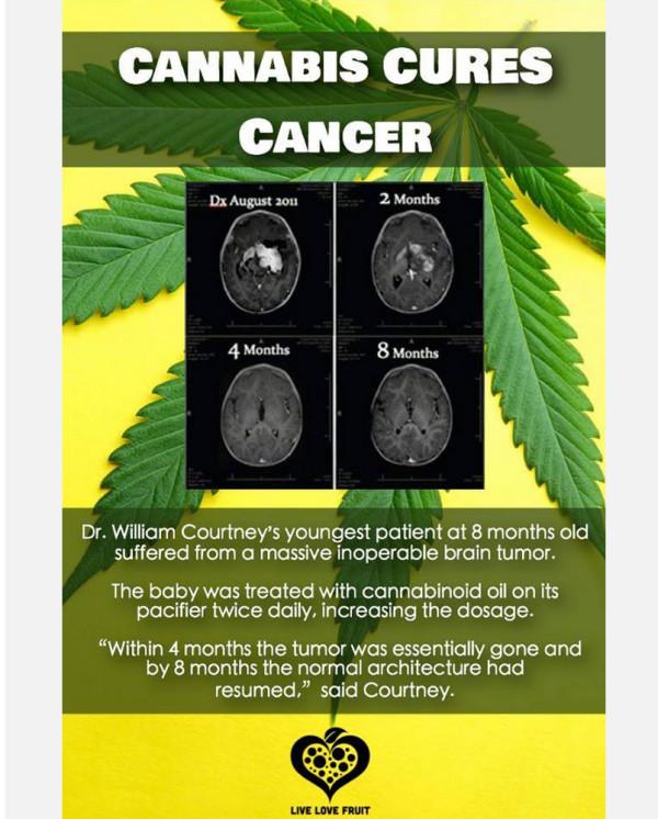 大麻を推奨するトンデモ健康サイト
