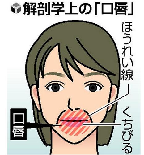 解剖学上の口唇の定義