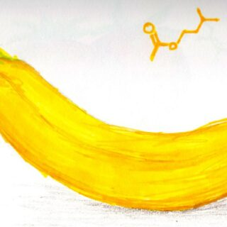 バナナが花粉症に効く説はeugenolという香り成分ですがこれはバナナに限りません