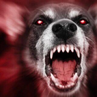 日本で狂犬病ワクチン(犬用)の接種は必要なのか?