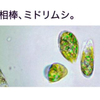 midori-mushi-1