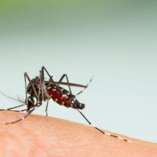 蚊に刺されやすいのは体質?血液型?遺伝?