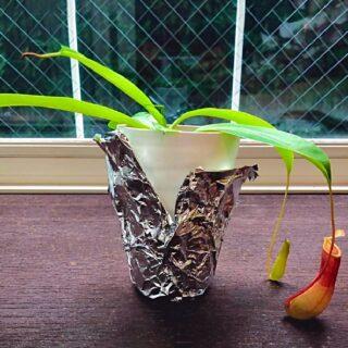 観葉植物に空気清浄・除菌効果はあるの?