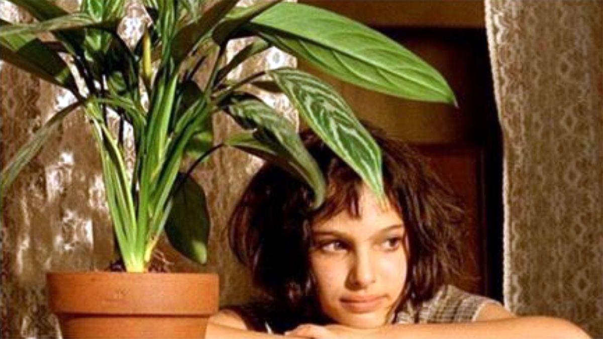 アグラオネマ (映画レオンで有名な鉢植え)