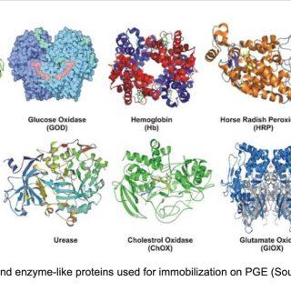 酵素の立体構造