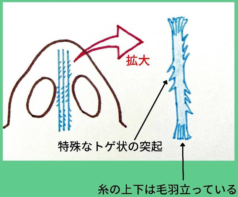 8~12本の糸を、鼻先の下に立てるように束状に入れ、鼻先を持ち上げるように埋め込みます